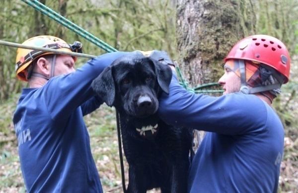 МЧС проводит учения с собаками в горах Сочи