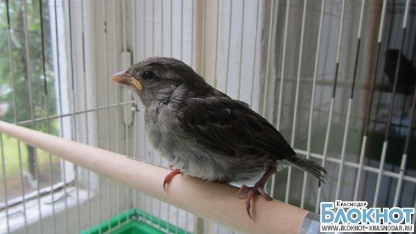 В Краснодарском крае эмигранты сталкиваются с ужесточением перевозки русских птиц