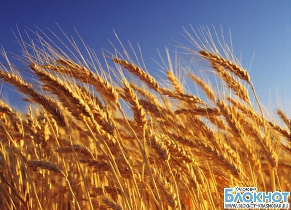 На Кубани установили рекорд по сбору урожая