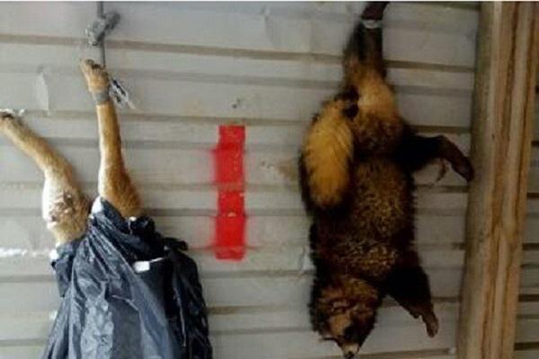 Полиция проверит информацию о жестоком убийстве собаки и енота в Краснодаре