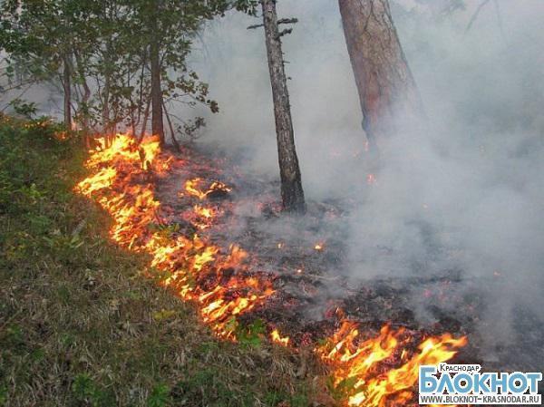 В районе Геленджика произошло возгорание лесной подстилки