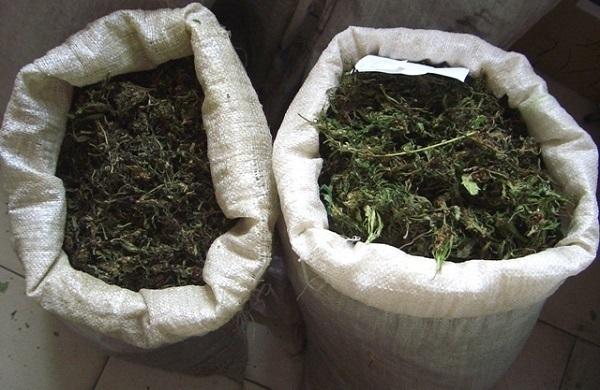 У жителя Кубани изъяли более 20 килограммов марихуаны
