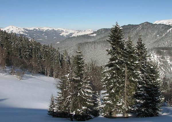 В Сочи перед новогодними праздниками усилили  охрану хвойных деревьев