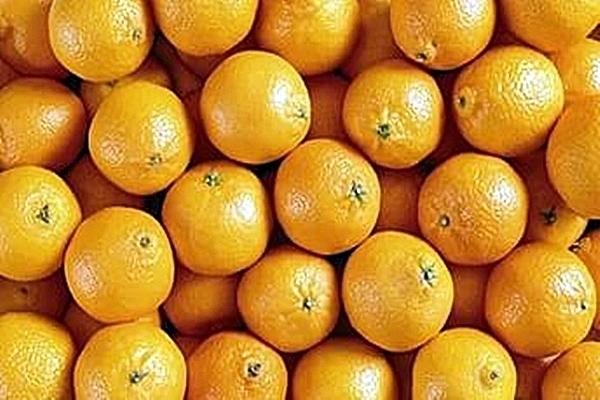 100 тонн апельсинов из Египта не попадут на стол к жителям Кубани