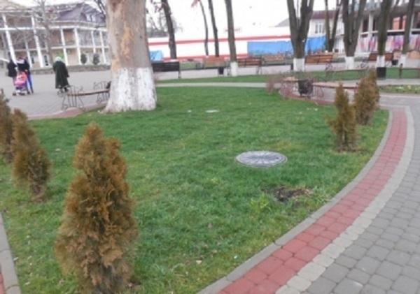 В Северском районе пенсионерка украла из парка пять ёлок