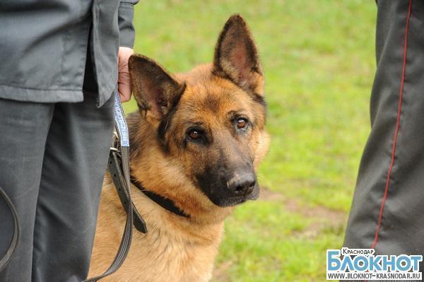 В Староминском районе собака Ирвин раскрыла кражу
