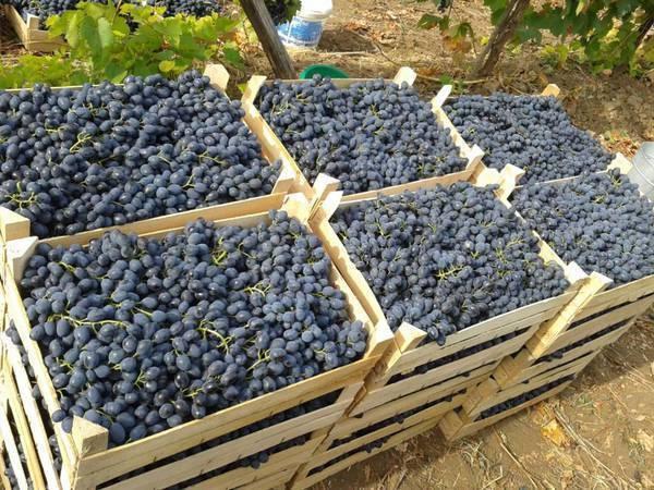 Кубань надеется на увеличение поставок сельхозпродукции из Узбекистана