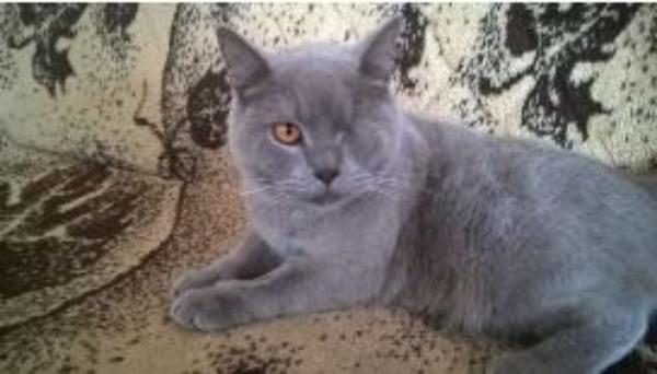 Краснодарский живодер заплатит за издевательства над котом