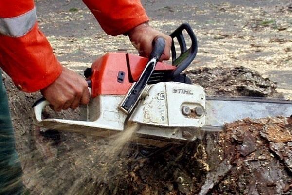 В Краснодаре срубят 184 дерева из-за расширения Ростовского шоссе