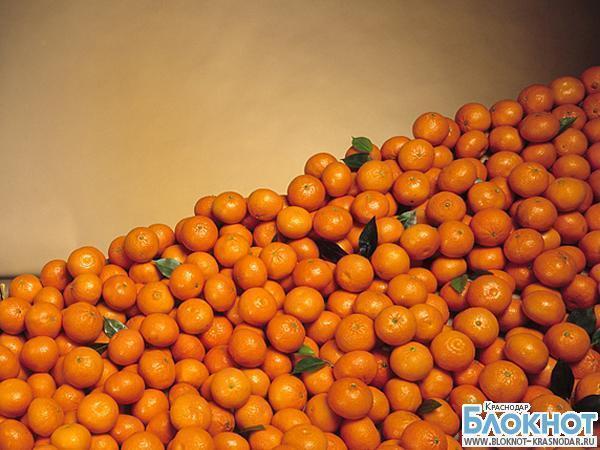 На Кубань из Турции привезли 23 тонны мандаринов с мухами