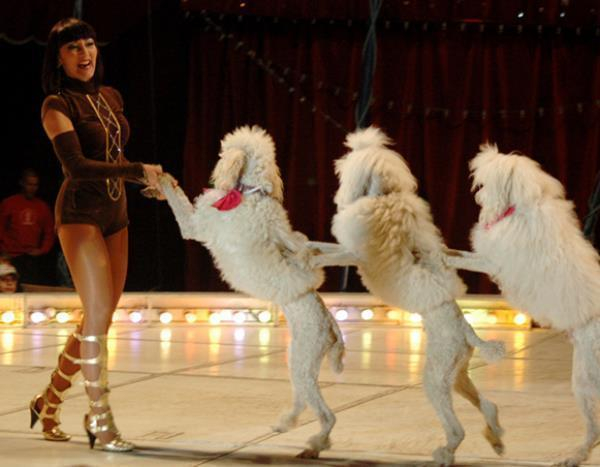 Власти края не считают целесообразным передавать Краснодарский цирк «Росгосцирку»
