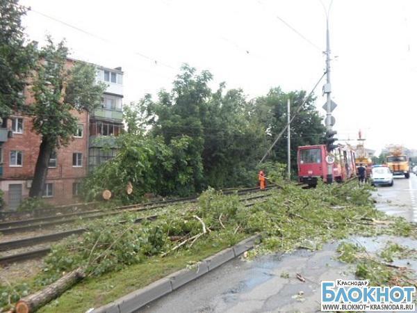 В столице Кубани пенсионерка пострадала при падении дерева