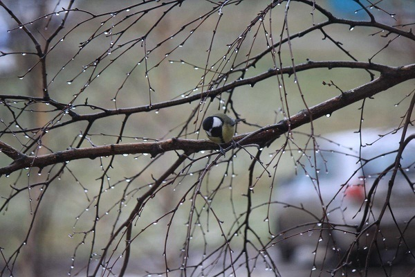 В Краснодарском крае синоптики прогнозируют  мокрый снег и гололед