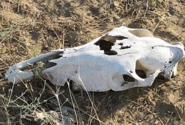 Судебные приставы борются с администрацией Отрадненского сельского поселения из-за скотомогильника