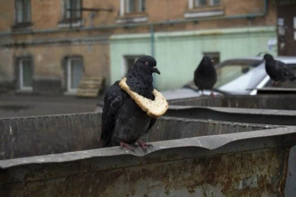 Голубь с хлебушком в Краснодаре стал «новостью дня»
