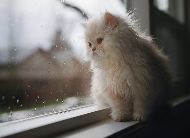 Краснодарская погода вынуждает взять зонтик