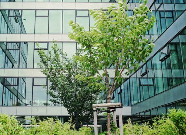 Разработку дендропланов для Краснодара ускорят