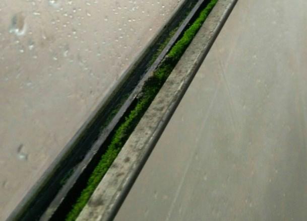 В трамваях Краснодара начал расти мох