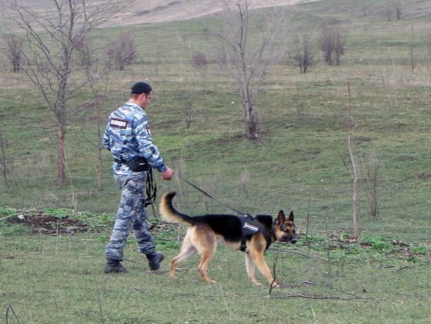 В Краснодаре мужчина жестоко убил собаку, которая загрызла его кур