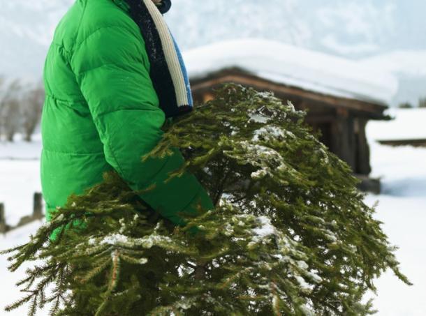 Жителей Кубани попросили не выбрасывать елки, а отдать их на корм