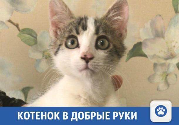 Доброго котенка отдадут в добрые руки