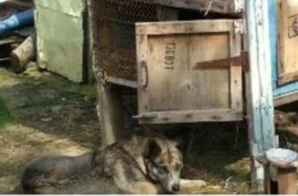 Под Краснодаром мужчина держал собаку в капкане