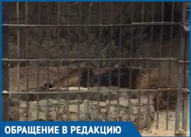 Краснодарцев возмутили условия содержания животных в Сафари-Парке