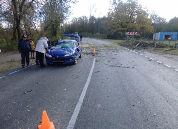 На «Пежо» упало дерево, пострадал младенец