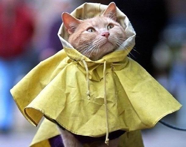 В выходные в Краснодаре пройдет небольшой дождь