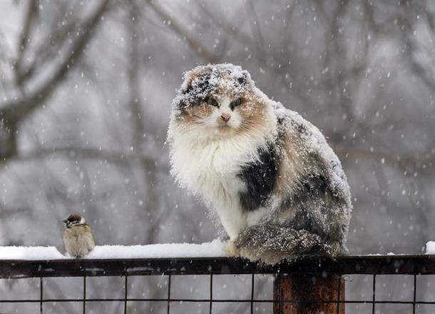 Обильный мокрый снег прогнозируют на Кубани 2 ноября