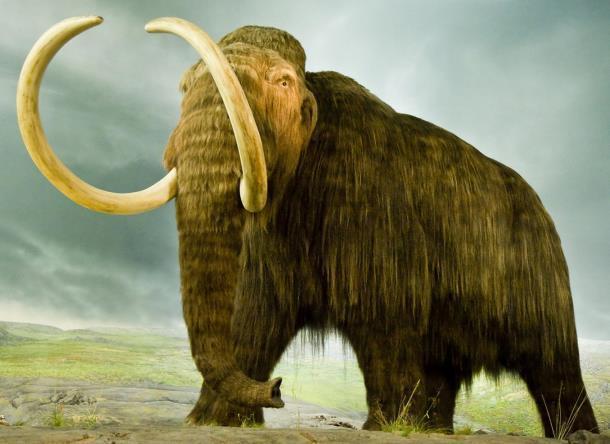 «Живые» мамонты и динозавры появятся в Краснодаре