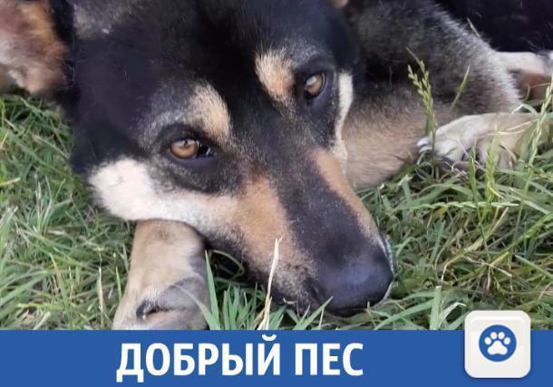 Умный и красивый пес ищет новых хозяевах