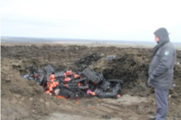 На Кубани уничтожили полторы тонны томатов черри и граната