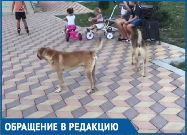 Бродячие собаки атаковали детскую площадку на Кубани