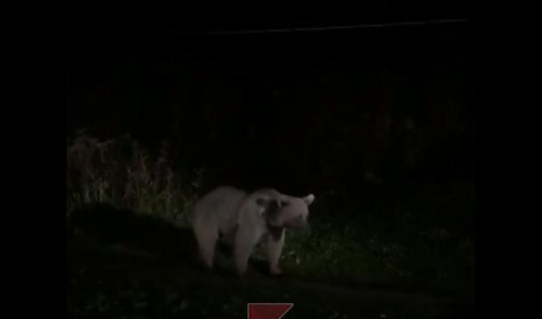 Медведь жутко напугал туристов в приюте «Фишт» под Сочи