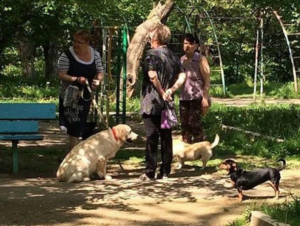 Бабушки-собачницы вступили в борьбу с «ужасными мамашами» в Краснодаре
