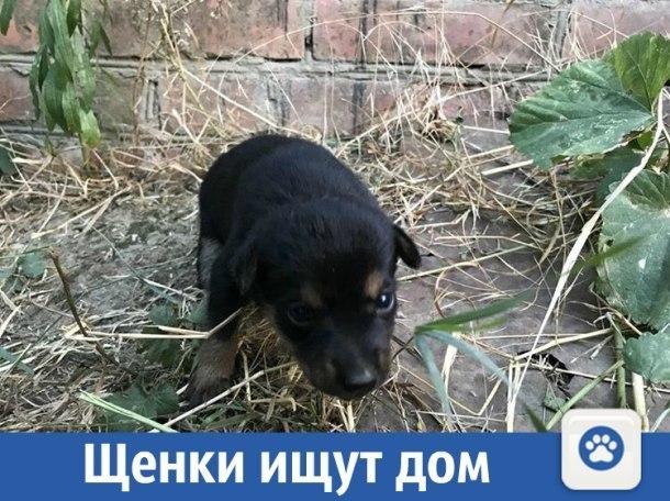 Помогите щенкам найти дом на Кубани