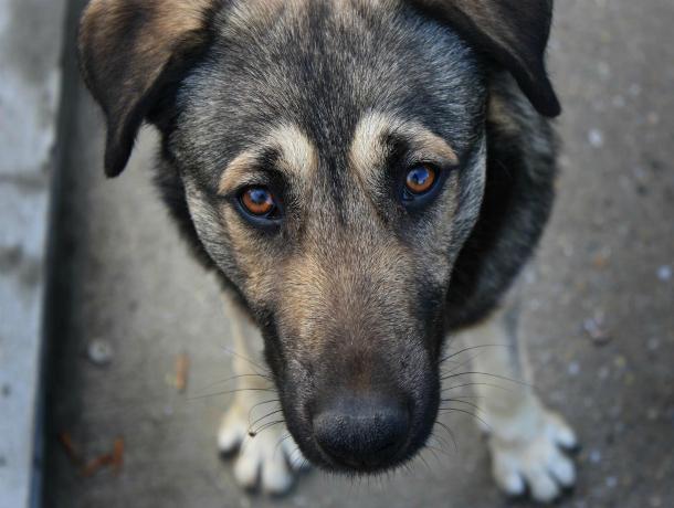 В Ейском районе занялись строительством огромного питомника для выброшенных на улицу собак