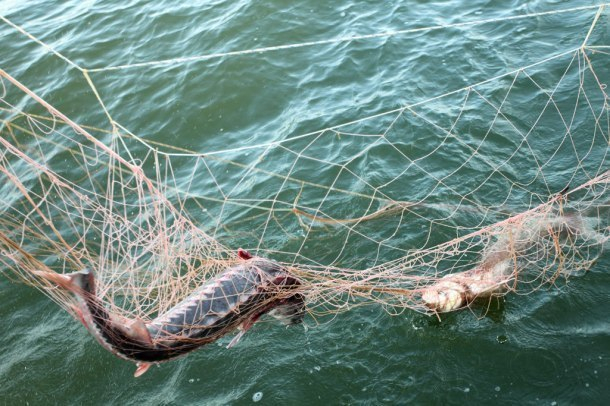 В Ейск спасать рыбаков приехал украинский консул