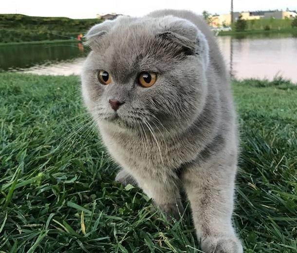 В Краснодаре кот выжил после падения с 12 этажа