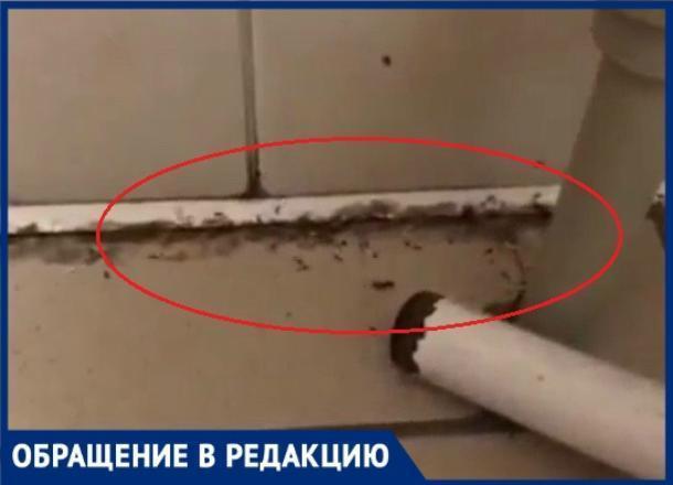 Полчище огромных муравьев заснял пациент в палате инфекционной больницы Краснодара