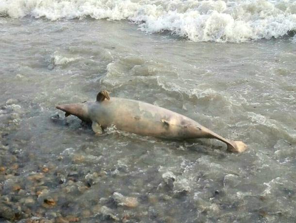 Мертвые дельфины в море возле Анапы своим видом нанесли психологическую травму детям