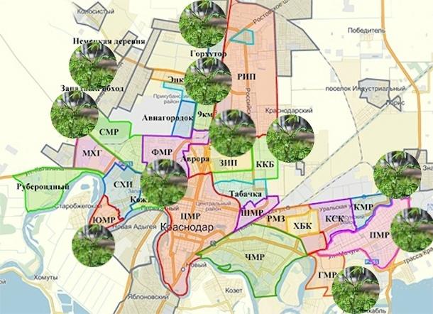 «Карта позора Краснодара»: еще в 9 микрорайонах разрослась амброзия