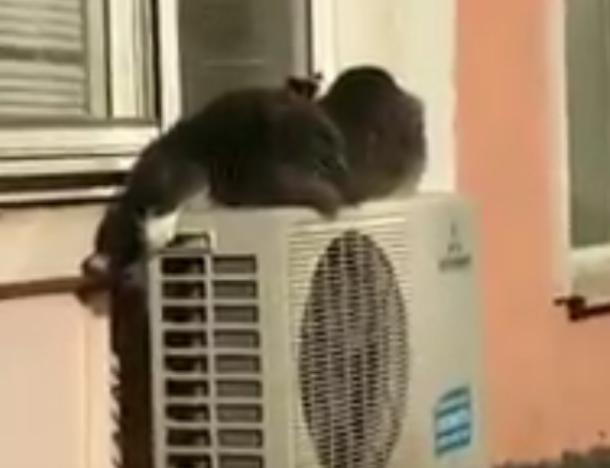Правоохранители Краснодара установили личность мужчины, выбросившего из окна 15 кошек