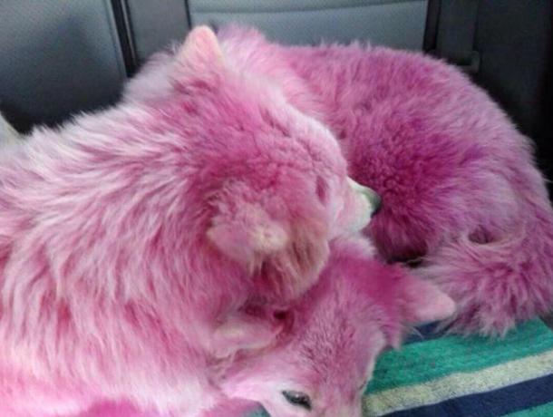 Выбросивший розовых собак в лес под Геленджиком фотограф избежал наказания