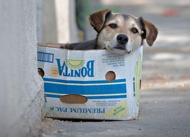 Зверье мое: против крематория для собак в Сочи высказались Олег Дерипаска и зоозащитники