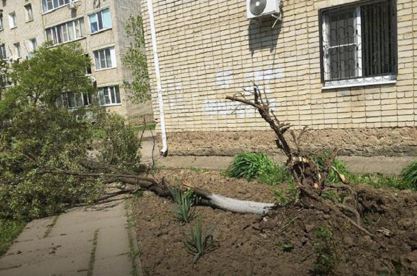 Ветер оборвал провода и повалил деревья под Краснодаром