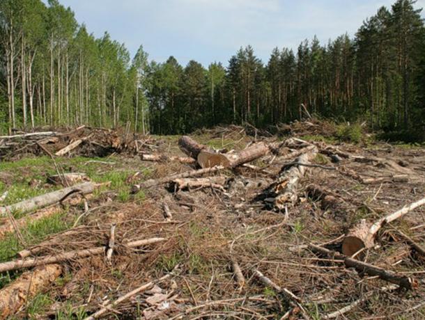 В Туапсинском районе «дровосеки» незаконно вырубили деревья на 200 тысяч рублей