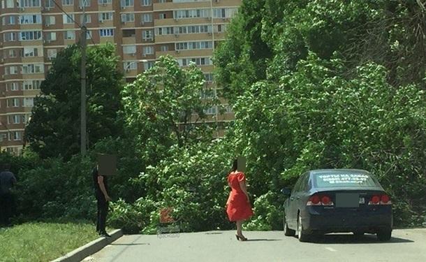 В Краснодаре дерево рухнуло на проезжую часть