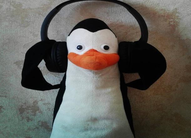 Пропавшего пингвина-путешественника разыскивают в Краснодаре